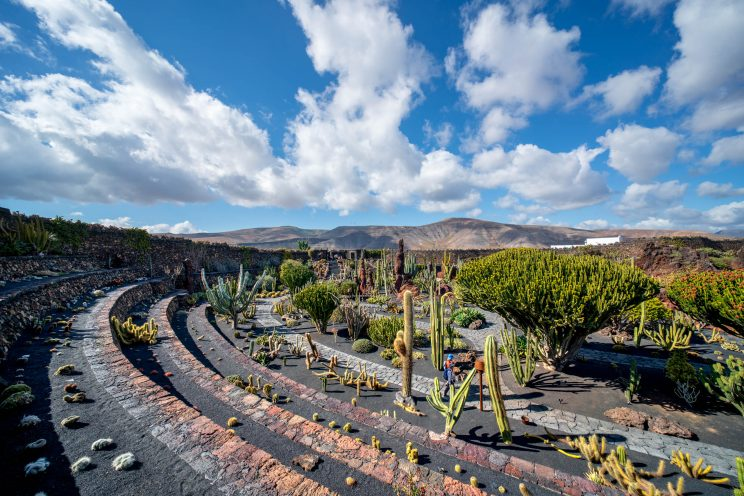 Cactus Garden 1 | f/8 1/320sec ISO-100 12mm  | ILCE-7RM3 | 2019-01-27 14:33:31