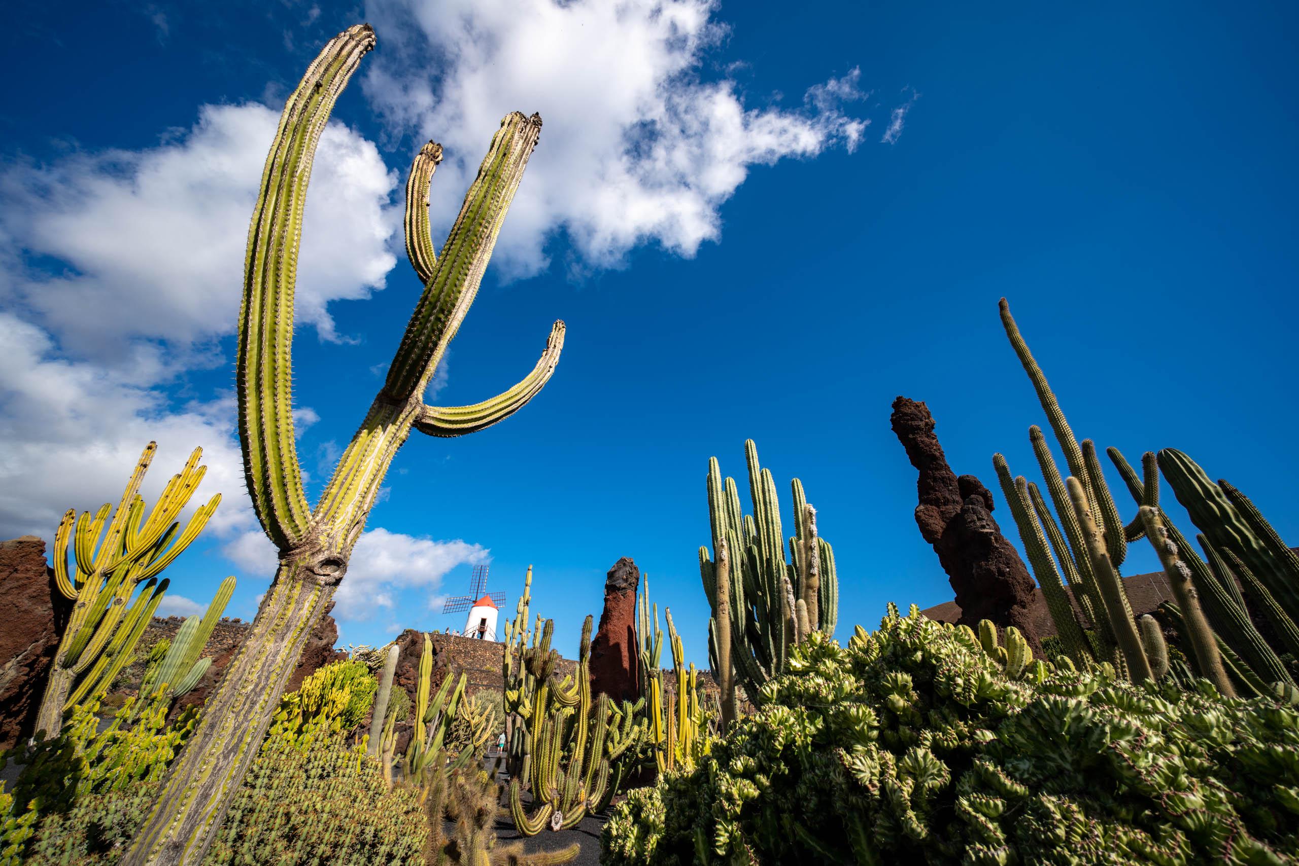 Cactus Garden 2 | f/8 1/400sec ISO-100 12mm  | ILCE-7RM3 | 2019-01-27 14:27:42