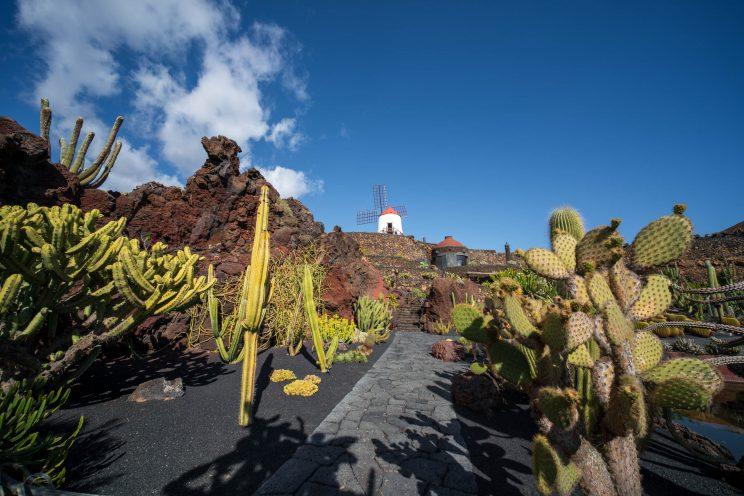Cactus Garden 3 | f/8 1/320sec ISO-100 12mm  | ILCE-7RM3 | 2019-01-27 14:23:07