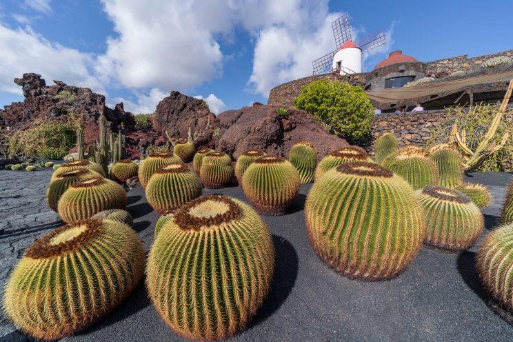 Cactus Garden 4 | f/8 1/320sec ISO-100 12mm  | ILCE-7RM3 | 2019-01-27 14:21:01