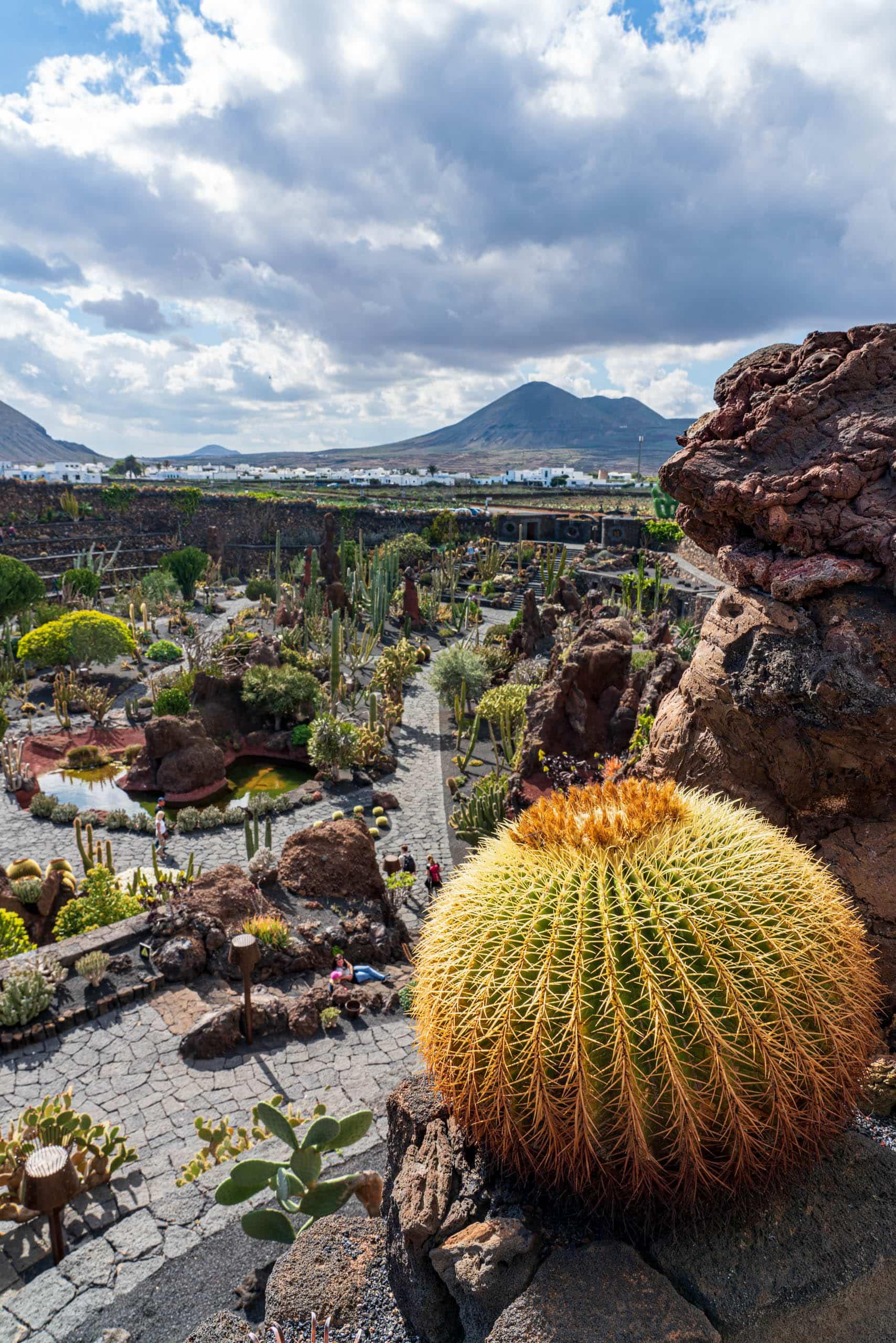 Cactus Garden 6 | f/13 1/80sec ISO-100 24mm  | ILCE-7RM3 | 2019-01-27 14:09:09