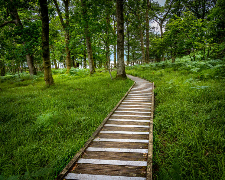 Path in Inchcailloch #1