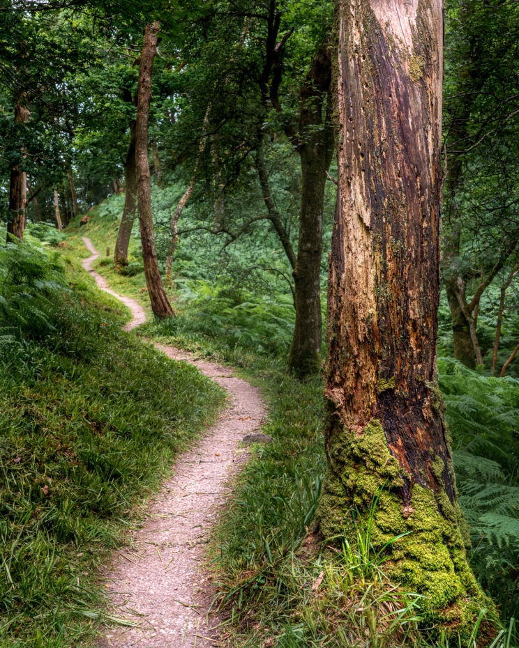 Path in Inchcailloch #2