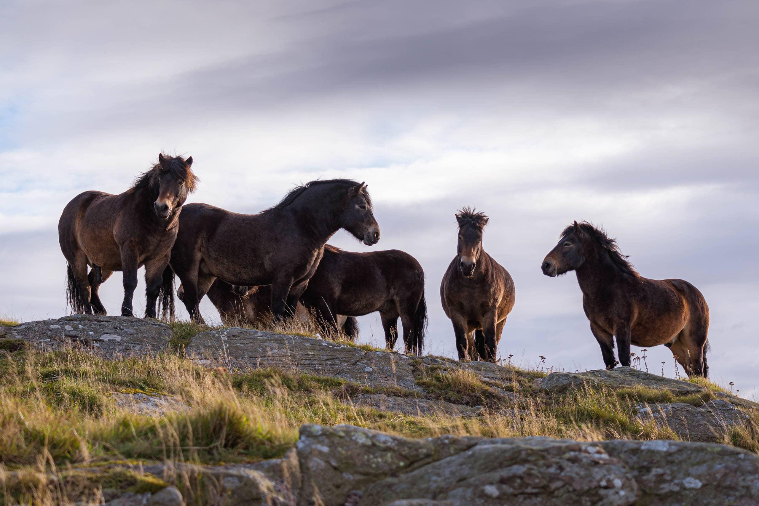 Horses on North Berwick Law | f/4 1/640sec ISO-100 57mm  | ILCE-7RM3