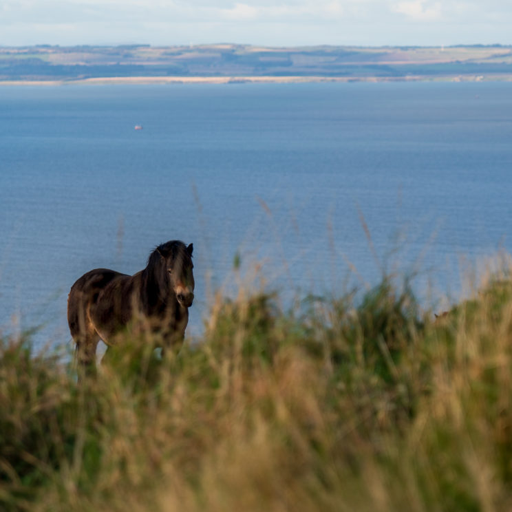 Pony on North Berwick Law | f/4 1/320sec ISO-100 105mm  | ILCE-7RM3