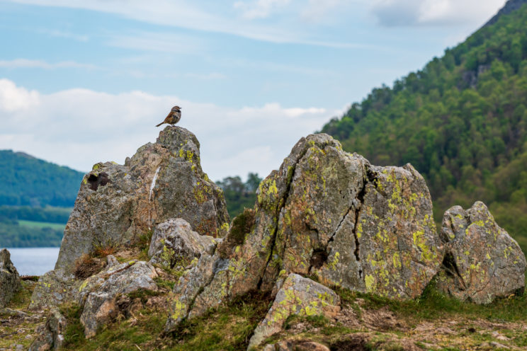 Rocks and a bird at Ullswater